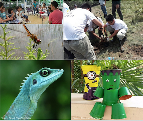 Summer 2016 programs by National Parks Board Singapore
