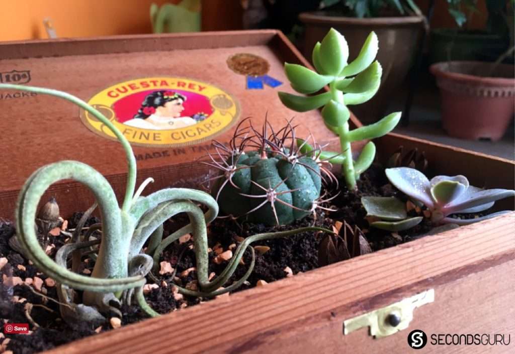 An easy tutorial turn old cigar boxes (or any other wooden box) into a desktop garden for succulents / cactus. Jazz up your coffee table or use the idea for a housewarming gift!