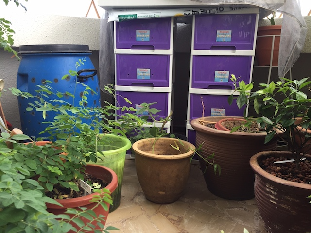 composting-in-the-balcony-singapore