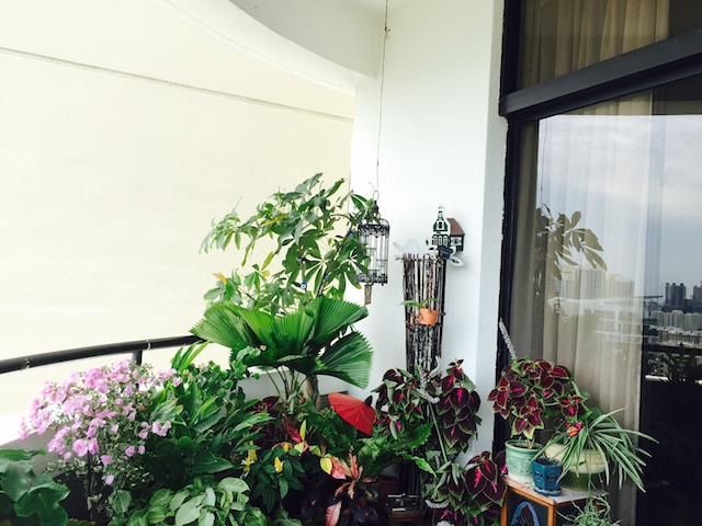 ornamental-plants-balcony-singapore