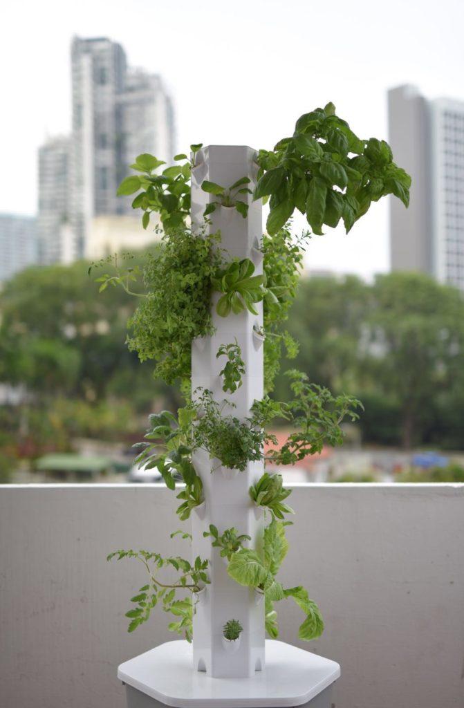 Aerospring garden singapore, aeroponics