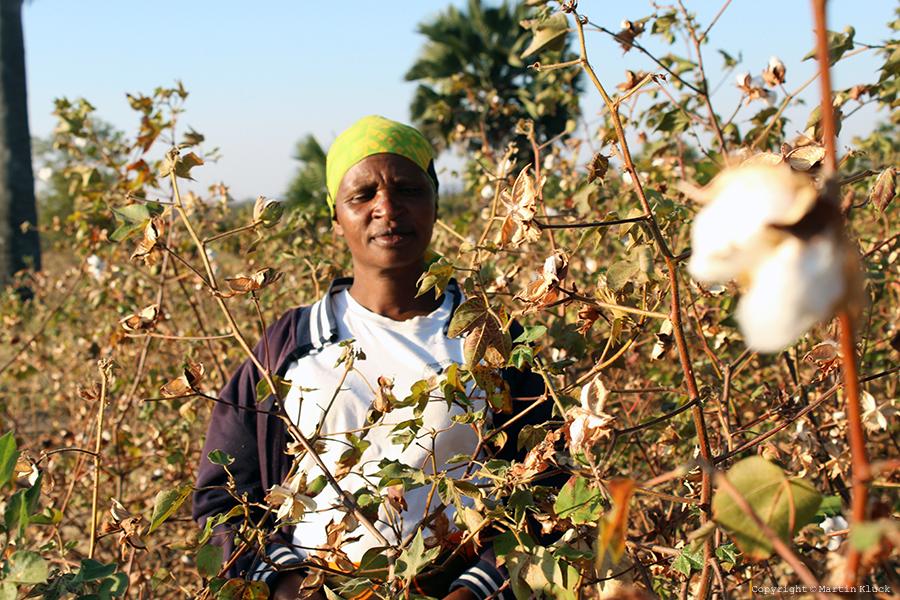 Bio sustain organic cotton Tanzania 4