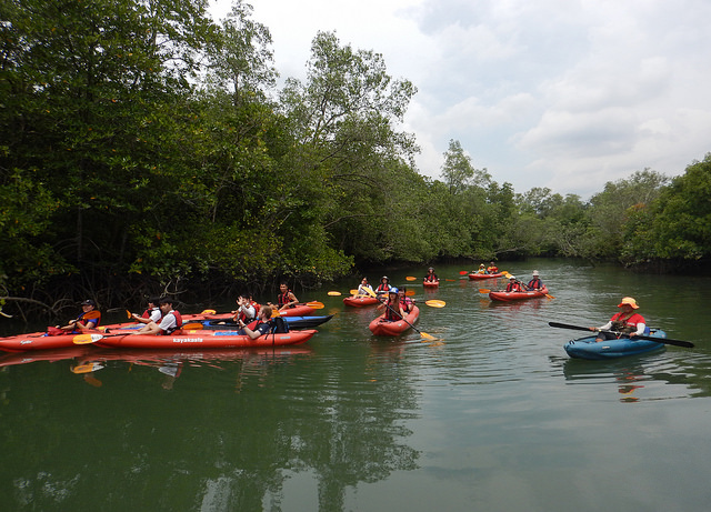 sungei Jelutong mangroves