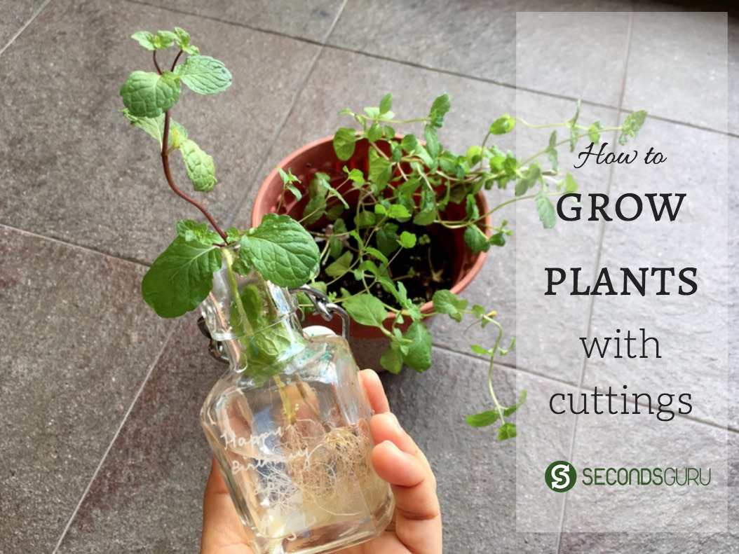 grow plants with cuttings