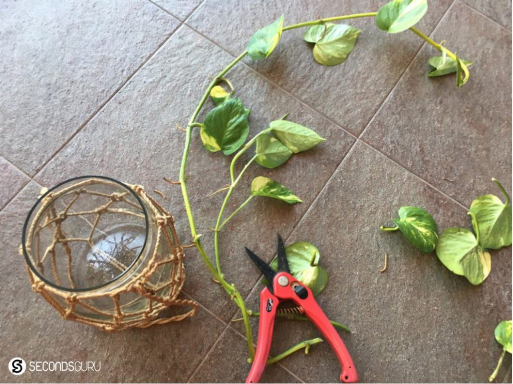 Growing flowers and plants from cuttings