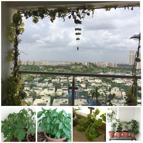 kitchen garden utility balcony with natural light and ventilation