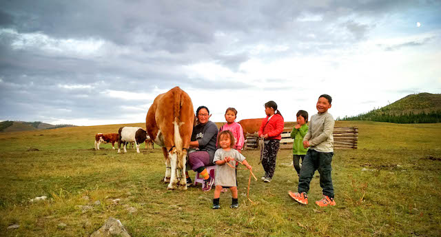 organic milk in mongolia, witness it as it happens