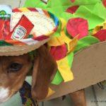 diy halloween dress up for your dog pet secondsguru