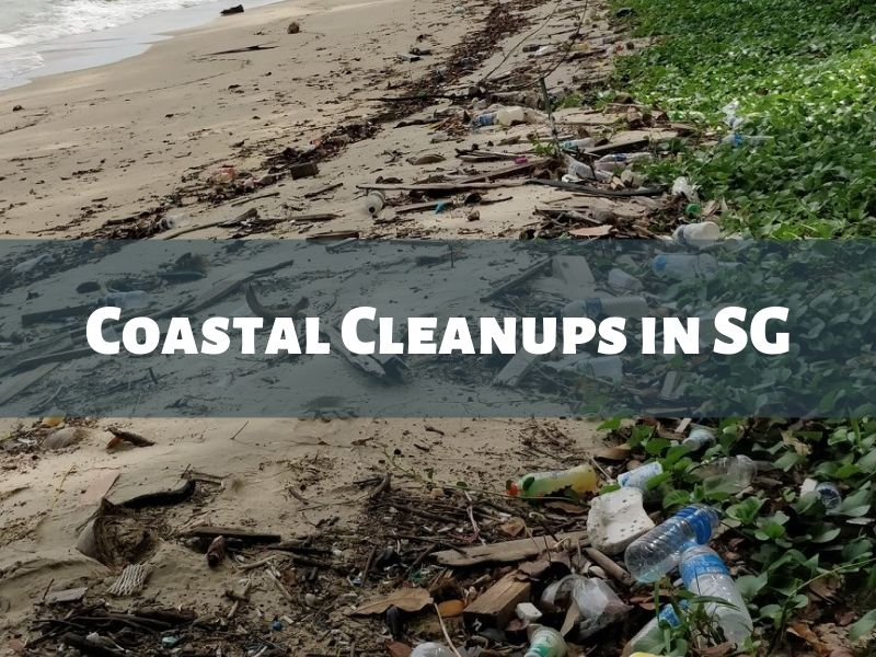 Coastal Cleanups in SG