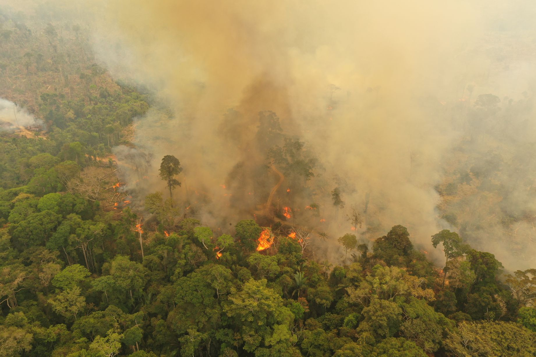 Amazon Forest on Fire