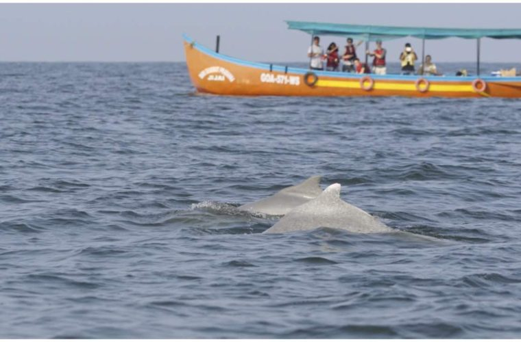 Eco Tourism Humpback Dolphins