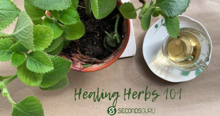 medicinal gerbs natural cure