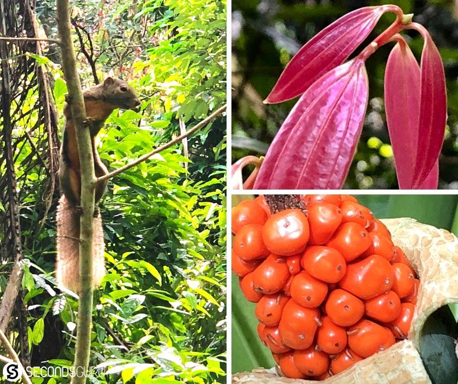 flora and fauna singapore