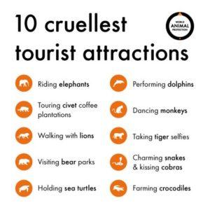 cruel wildlife tourism activities