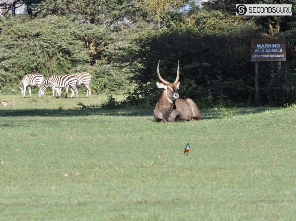 an animal friendly safari sustainable safari