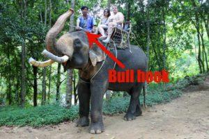 Elephant ill treatment