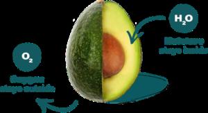 Avocado_Apeel Lifesciences