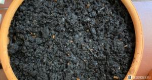 compost in focus